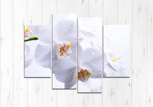 Модульная картина Белая красота