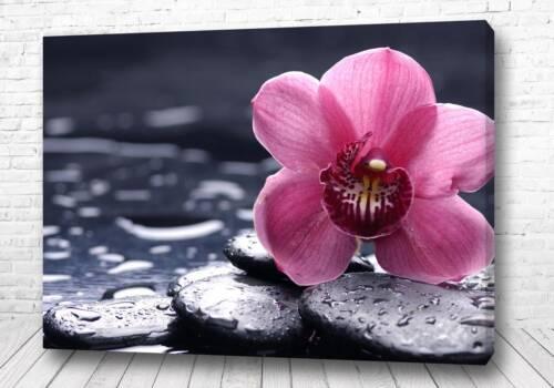 Постер Розовое чудо