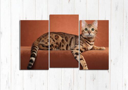 Модульная картина Кошка Ашера