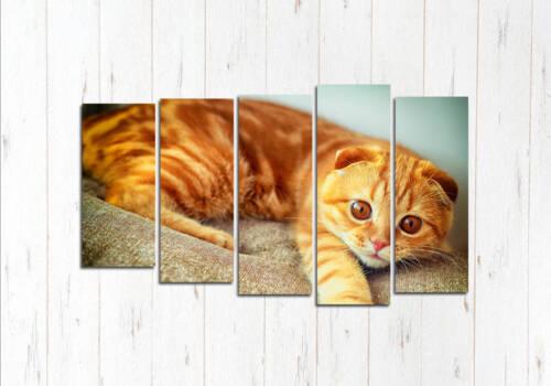 Модульная картина Персидская кошка