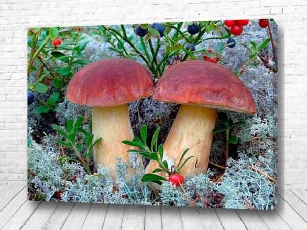 Постер Два гриба