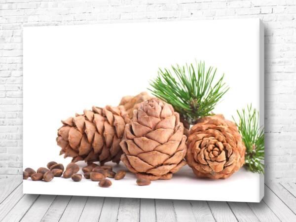Постер Кедровые орешки