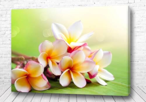 Постер Прекрасные цветы