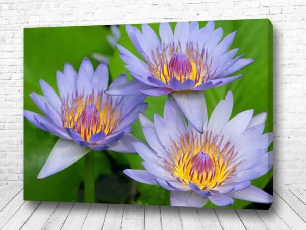 Постер Красота цветочная