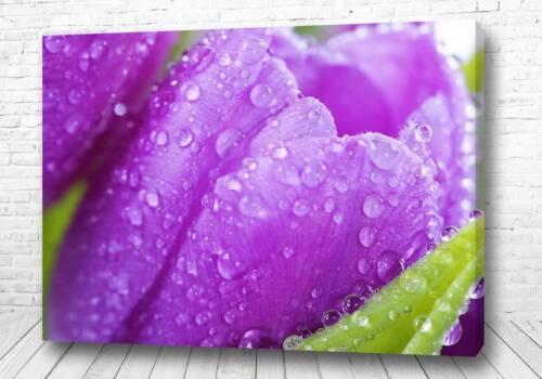Постер Фиолетовая лилия