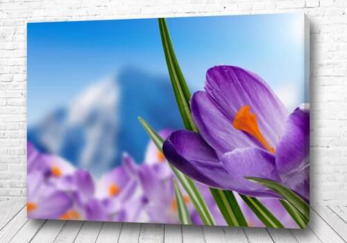 Постер Сияние цветка