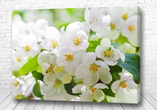 Постер Беленькие цветы