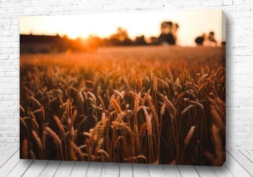Постер Закат в полях