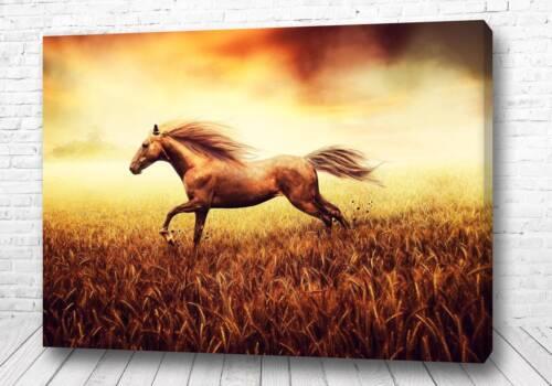 Постер Золотой конь
