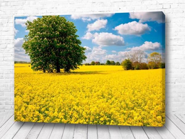 Постер Одинокое дерево