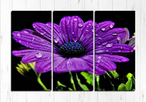 Модульная картина Капли на цветке