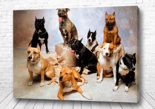 Постер Стая собак