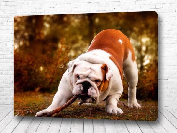 Постер Мощный бульдог