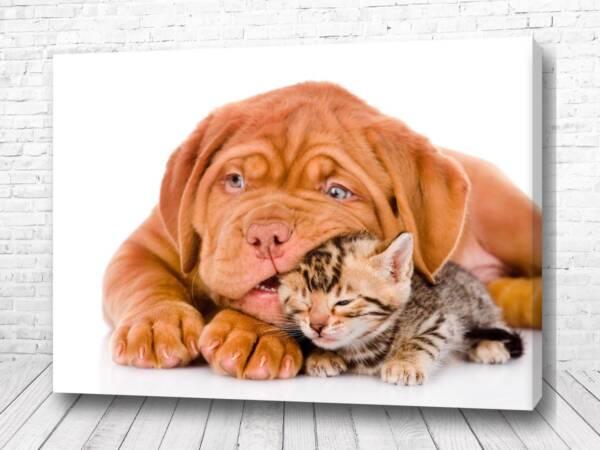 Постер Дружба
