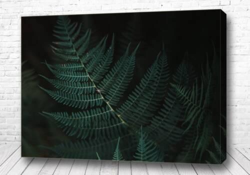 Постер Листья в ночи