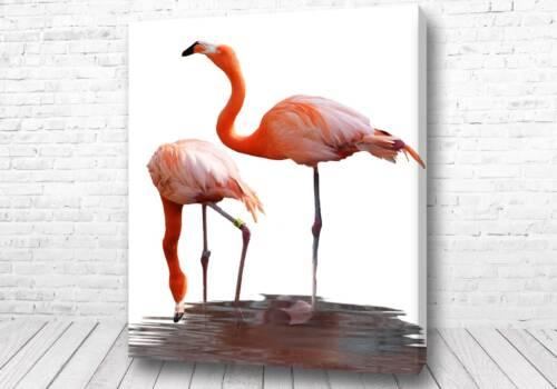 Великолепные фламинго