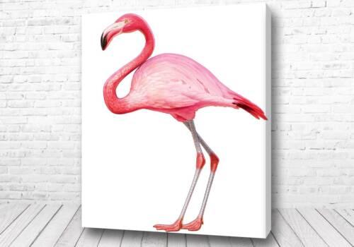 Грациозный фламинго
