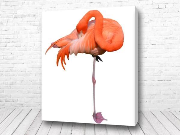 Постер Грациозный фламинго