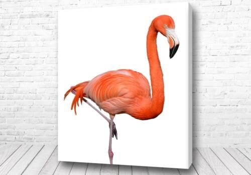 Восхитительный фламинго