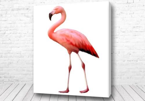 Прелестный фламинго