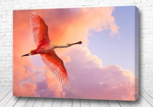 Фламинго в небе