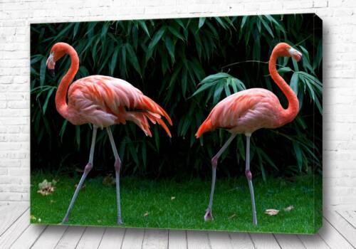 Постер Два фламинго