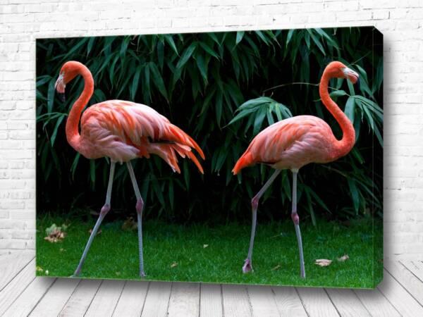 Два фламинго