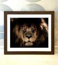 Картина в раме Царь зверей