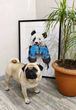 Панда в перчатках постер в раме в стиле лофт